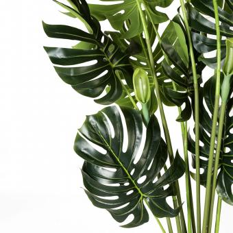 Tree - Monstera H1600